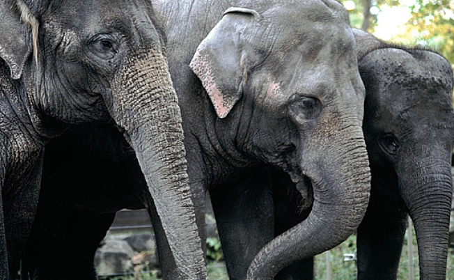 National Zoo Welcomes 3 New Elephants From Canada