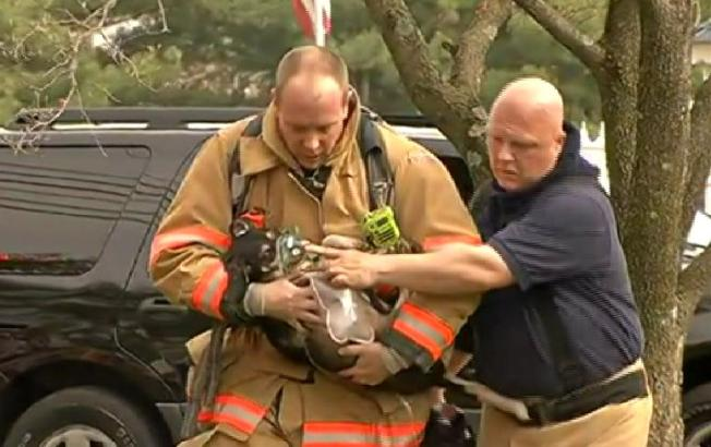 Dogs Rescued From Gaithersburg Fire