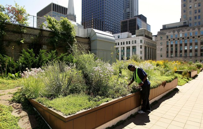 Time Running Out to Get DC to Pay for Your Green Roof