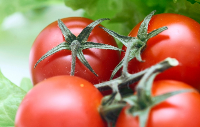 Organic Produce: Worth Its Weight in Green