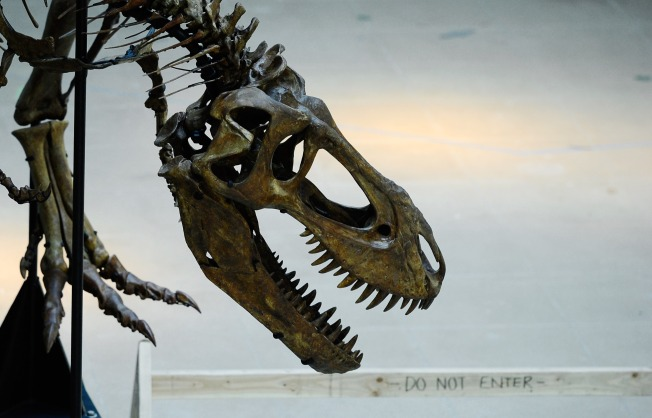 Smithsonian's Dinosaur Hall to Receive $45 Million Upgrade