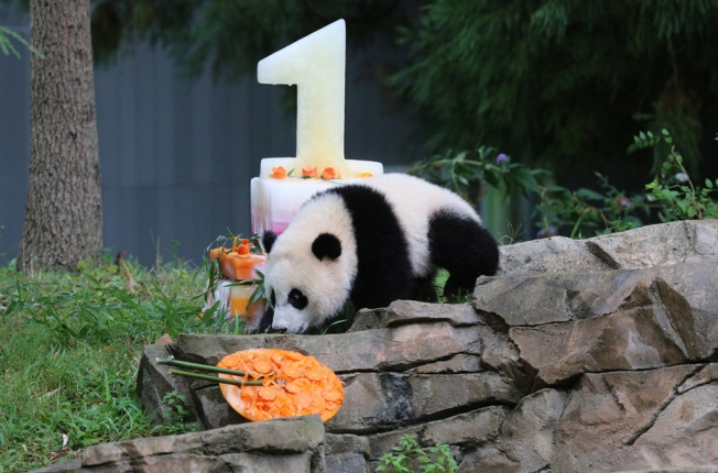 National Zoo Pandas to Celebrate Birthdays Saturday