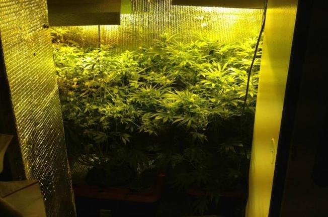 Closet Filled With Marijuana Found in Prince George's Co.