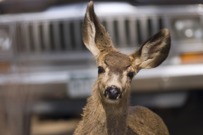 Maryland Woman Kicked by Rabid Deer