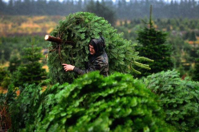 Virginia Grower to Provide Christmas Tree to VP