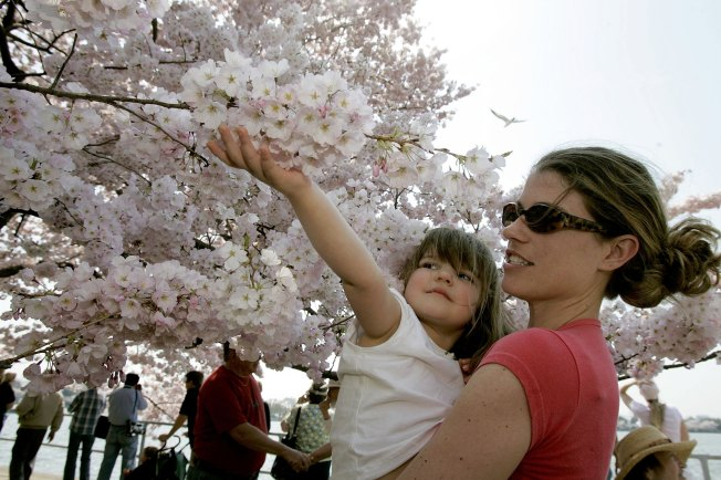 "Arlington Tops, D.C. Flops, on ""Parenting"" List"