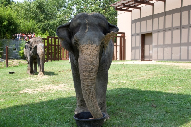 Call on Area Students to Write Letters to Elephants