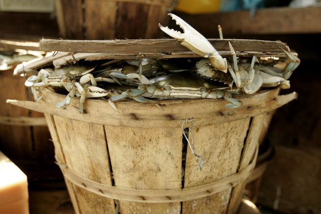 Va. Extends Blue Crab Harvest by Two Weeks