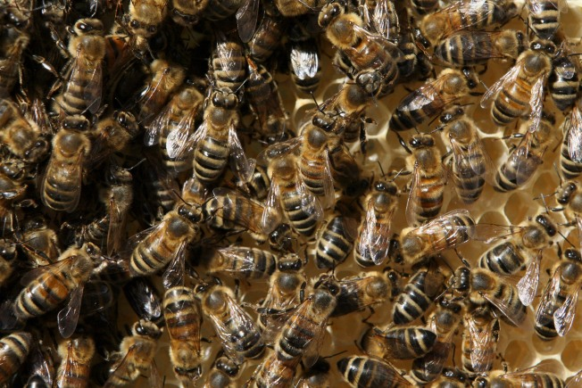 Va. Grants Support Beehives in 2013