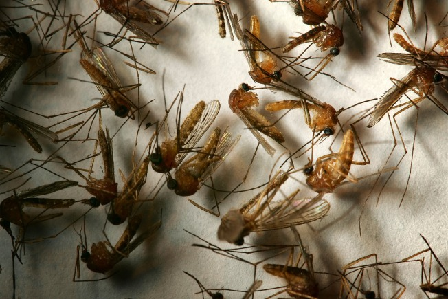 West Nile Virus Found at 5 Virginia Beach Sites