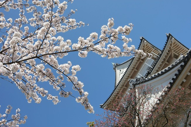 Send in Your Cherry Blossom Pics & Haiku