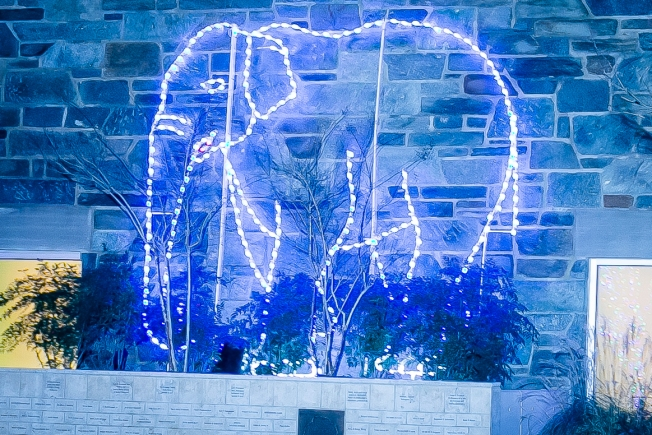12 Days of ZooLights: Asian Elephant