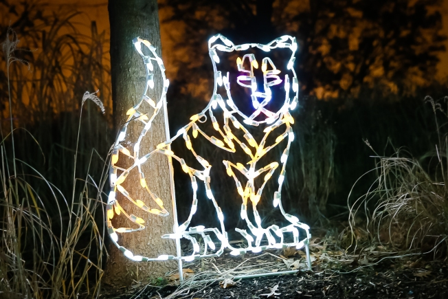 12 days of ZooLights: Tigers