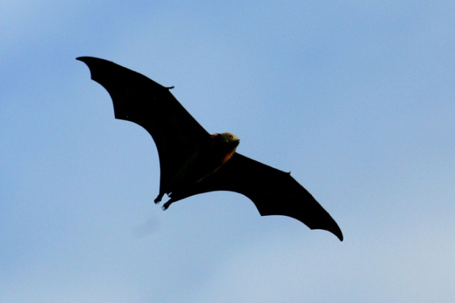 Rabid Bat Found in Annapolis Apartment Building