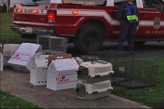 Dozens of Cats Die in Va. House Fire
