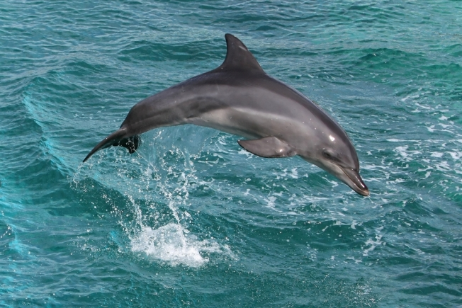 Smithsonian Scientist Joins Va. Dolphin Probe