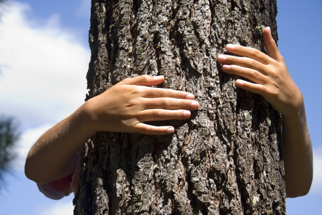 """Tree Huggers"" to Feel Up D.C.'s Cherry Trees"