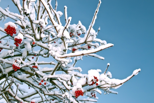 Snow Way to a White Christmas? Think Again