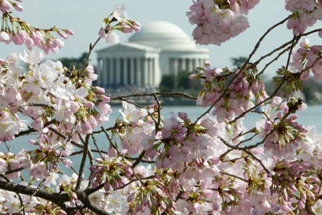 First-Time Fee for the Cherry Blossom Fest