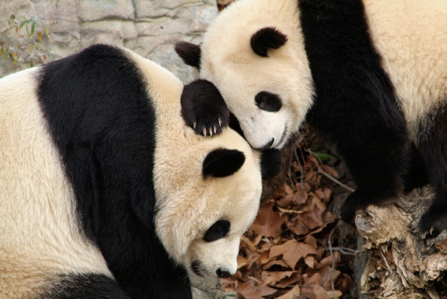 Mei Xiang and Tian Tian Can Stay!