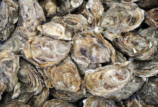 Maryland's Oyster Population Reaches Highest Point in Decades