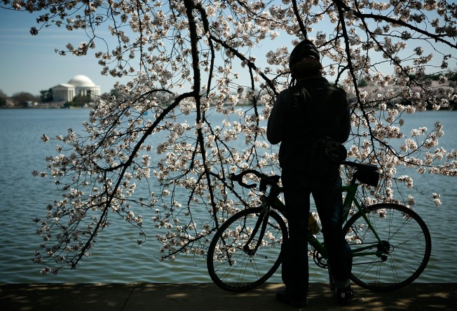 National Cherry Blossom Festival Draws to a Close