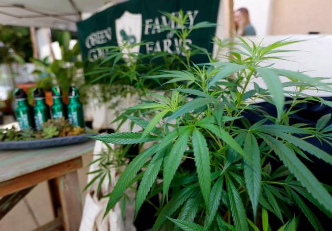 Recreational Marijuana, Paid Leave Among New Year's Laws