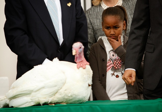 Obama to Pardon Turkeys Wednesday