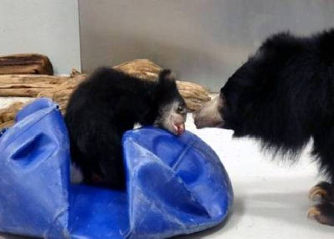 Name the Zoo's Baby Sloth Bear