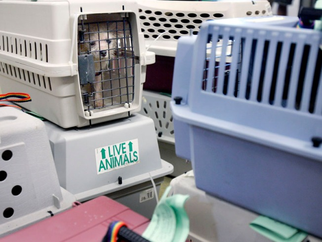 Animal Shelters Swell During Summer Swelter