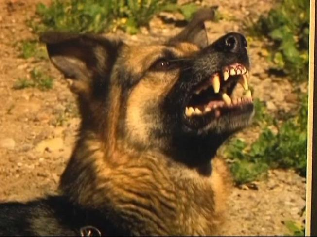 Police Remember Their Canine Counterparts