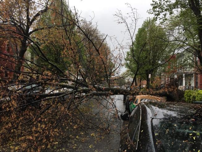 PHOTOS: Storms Uproot Trees, Rain Hail Onto DC Area