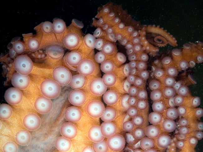 The Zoo's New Octo-Buddy Gets a Name