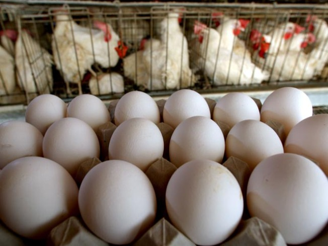 Egg Recall Drives Worried Customers to Farmer's Markets