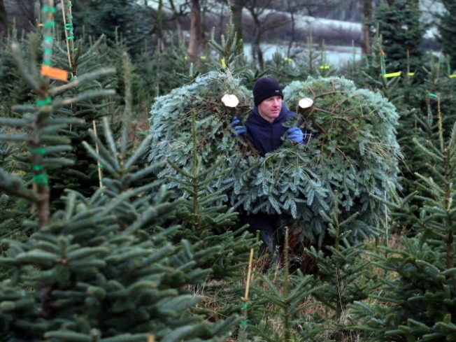 Buy a Christmas Tree, Go to Latvia?