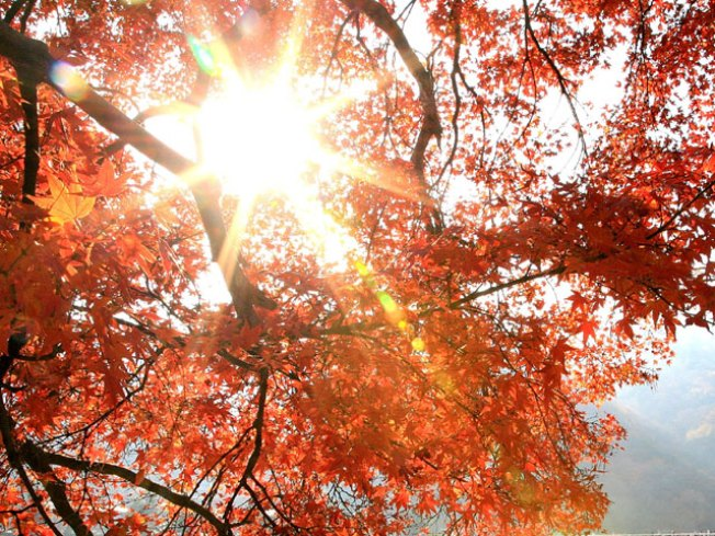 Forecast Right For Fall Colors to Shine Brightly