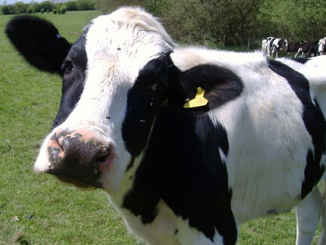 Raw Milk Advocates Plan on Having a Cow on Capitol Hill