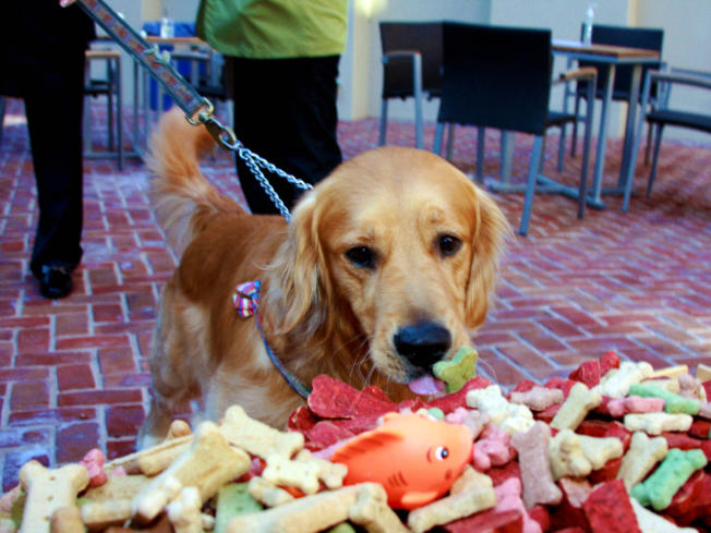 Where to Take Your Puppies for Yummies: Your Dog-Friendly DMV Guide