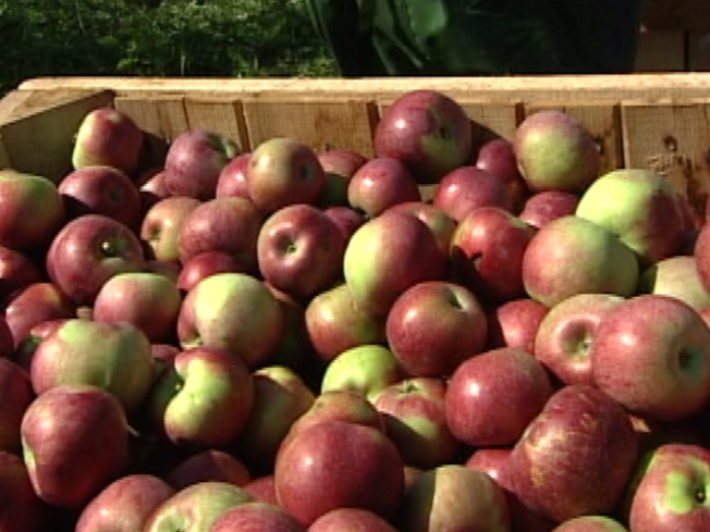 Fewer Apples to Fall in Va.