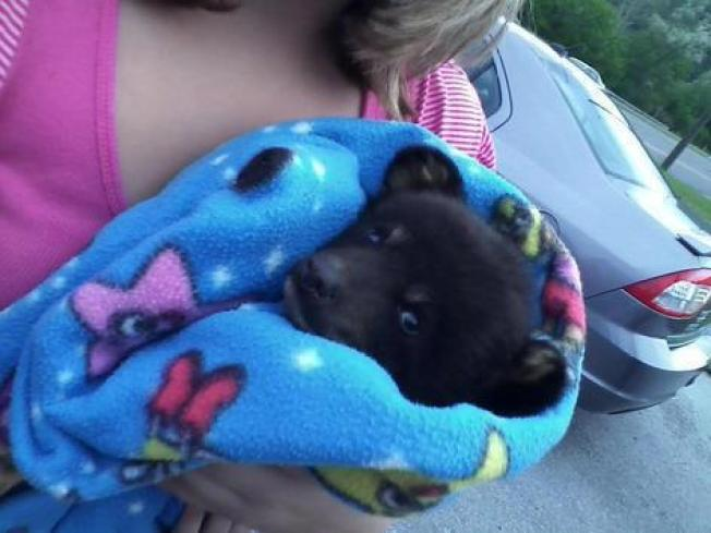 Healthy Bear Cub Euthanized