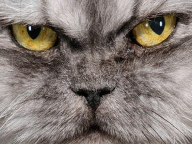 homemade flea spray safe for cats