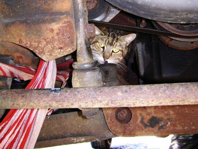Dapper Kitty's Scarf Caught in Truck Engine