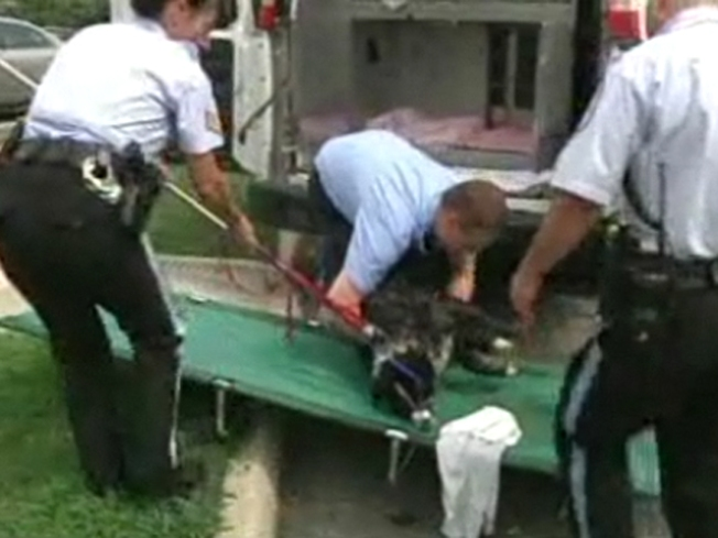 Dog Dies After Potomac Rescue