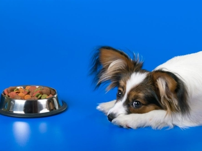 Diamond Pet Foods Recalls Dry Dog Food