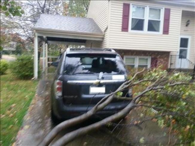 After Sandy: Insurance & Downed Trees