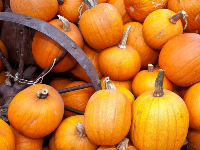 Halloween Ruined by Maryland Pumpkin Shortage