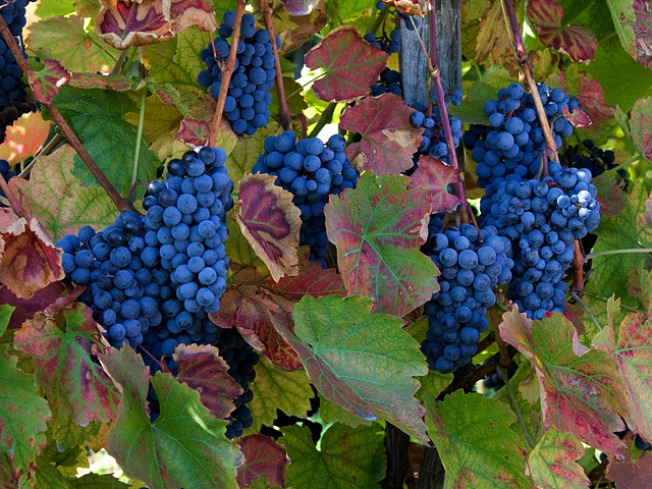 New Virginia Fall Travel Site Locates Wine