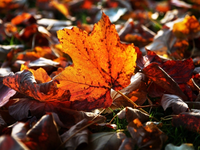 Fall Foliage: Colors of the Season