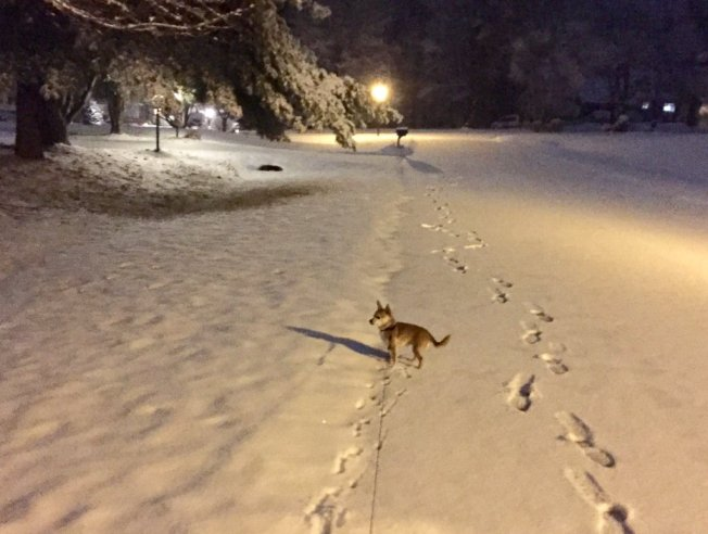 In Pictures: Snow and Slush Blanket DC Region
