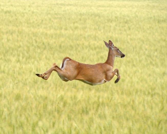 SWAT Teams To Help Control Va. Deer Population